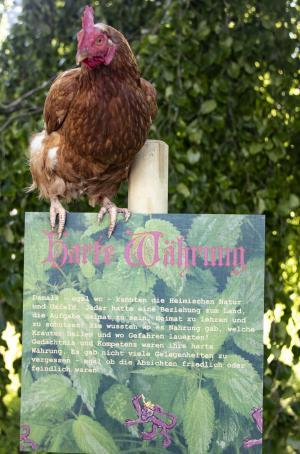 Harte Währung mit Huhn